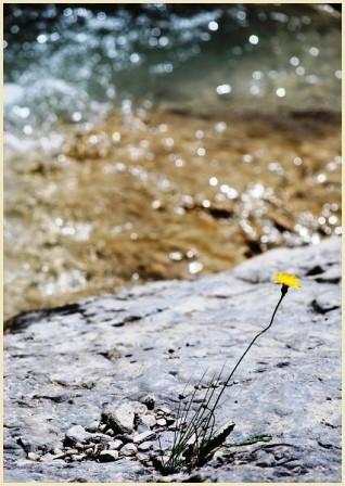 Fleurs 1-PhotosLP-2008.jpg