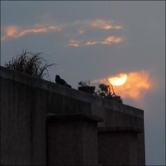 Rendez-Vous sur un toit (3) PhotosLP.jpg