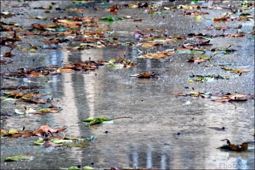 Pluie diluvienne-Feuilles-Cagnes-PhotosLP Fallot   .jpg