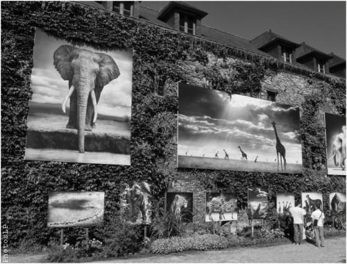 Sur les murs à La Gacilly-Festival photo 2010-PhotosLP (5).jpg