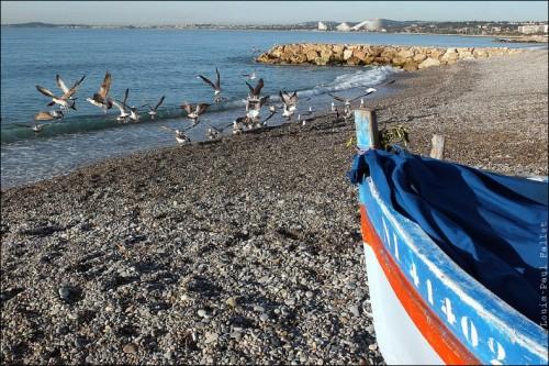 Pêche à la poutine au Cros de Cagnes-PhotosLP Fallot (9).jpg