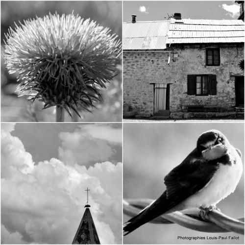 Haute-Provence-juin 2014-PhotosLP Fallot.jpg
