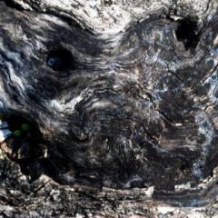 Le vieil arbre-PhotosLP -2009.JPG