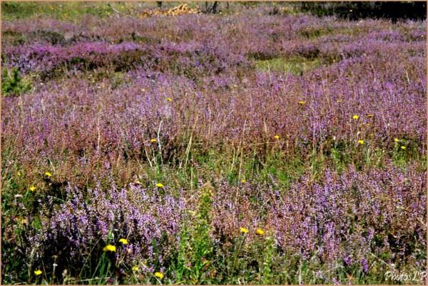 Fleurs de septembre-PhotosLP-2010 (2).jpg