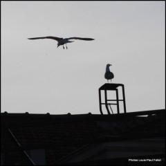 Les Jonathan sur un toit-PhotosLP-2009.jpg