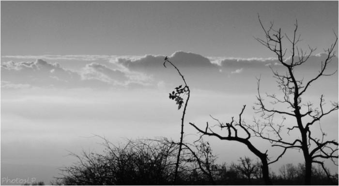 Au soleil levant-1012011-PhotosLP Fallot (3).jpg