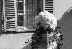 Symphonie Florale-PhotosLP Fallot (24).jpg