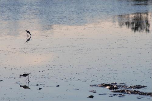 kerguilloté,quimiac,mesquer,photo,terres marines,bretagne,carnet de voyage été 2012