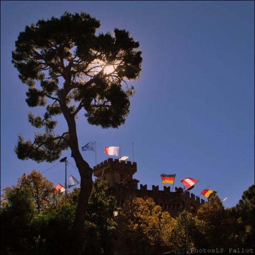 L'arbre du Haut de Cagnes-PhotosLP Fallot (4).jpg