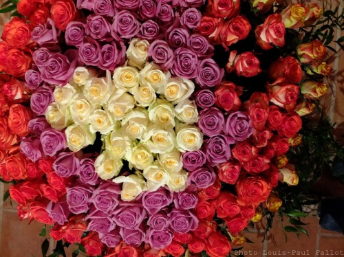 Symphonie Florale-PhotosLP Fallot (31).jpg