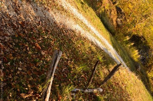 Chemins au Fugeret-PhotosLP Fallot (4).jpg