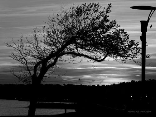 poème,l'amour la poésie,arbre,bord de mer,paul éluard