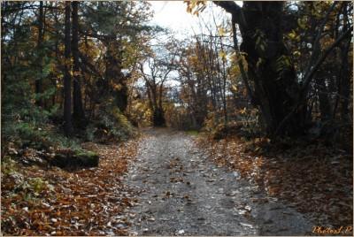 Quand la route devient chemin-PhotosLP Fallot-2010 (6).jpg