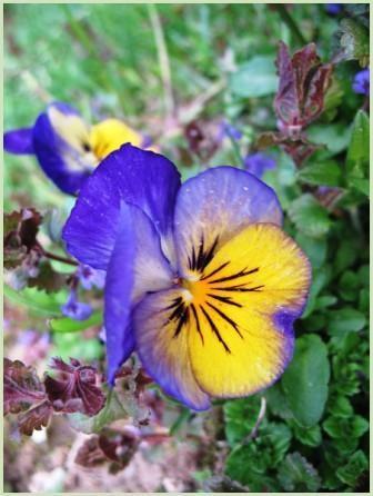 Fleur 2-Photo DominiqueW-2008.jpg