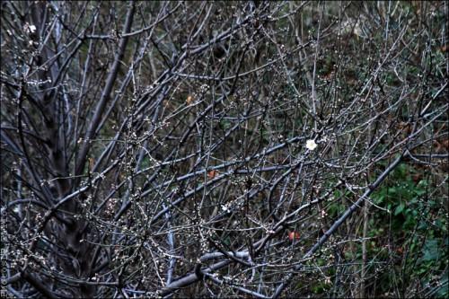 Fleurs en hiver-PhotosLP Fallot (5).jpg
